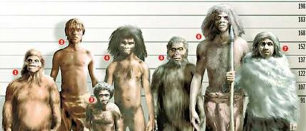 Diferentes especies evolutivas predecesoras al Homo Sapiens